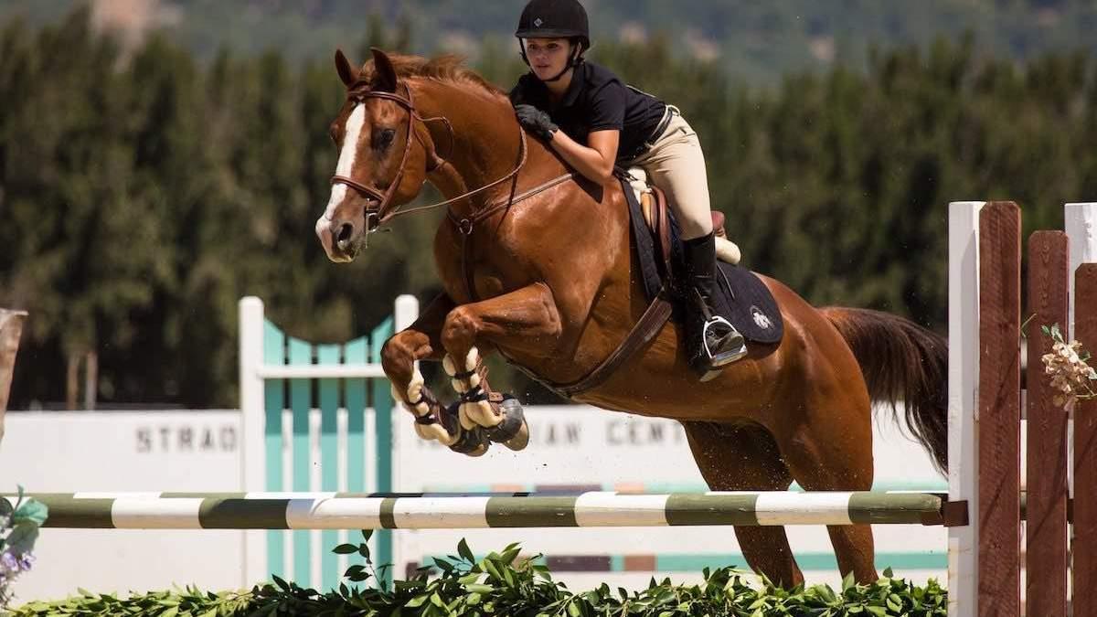 Как начать заниматься конным спортом: советы и нюансы