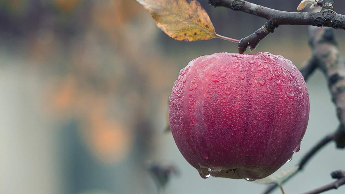 Користь і шкода яблук: Фус назвала цікаві факти про популярний фрукт